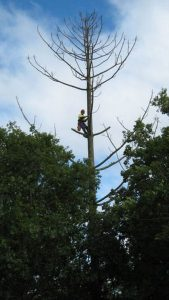 Tree Removal Service In Austin